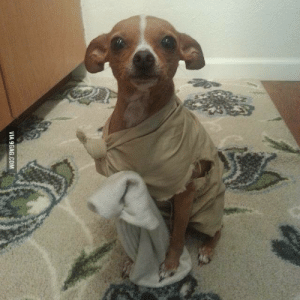 9gag, Clothes, and Tumblr: VIA 9GAG.COM suburbanlumberjack:  Master has given dobby a sock, Master has presented dobby with clothes Dobby is FREEEE!!