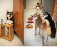 9gag, Memes, and 🤖: VIA 9GAG.COM When this doge was given timeout by owner other friends refused to eat. Doge is love. Follow @9gag @9gagmobile 9gag Shibainu Doge Dogs