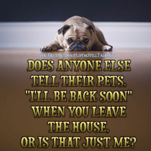 Memes, Soon..., and Pets: VIA: FB.cOM/SHuTuPIMSTILLTALKING  DOES ANYONE ELSE  TELL THEIR PETS  ILL BE BACK SOON  WHEN YOU LEAVE  THE HOUSE  OR IS THAT JUST ME?