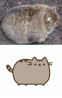 Pusheen is REAL!: VIA9GAG.COM Pusheen is REAL!