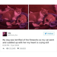 Memes, Butterfly, and Fireworks: Vic  Follow  @Victoria Eve  My dog was terrified of the fireworks so my cat went  and cuddled up with her my heart is crying still  6:26 PM 5 Jul 2016  13,245 19,622 Follow my backup @x__social_butterfly__x