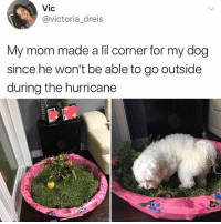Memes, Hurricane, and World: Vic  @victoria_dreis  My mom made a lil corner for my dog  since he won't be able to go outside  during the hurricane FOLLOW @kalesalad BEFORE THE WORLD ENDS YOU DONT WANT TO MISS OUT ON ANY MEMES