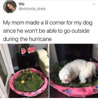 Memes, Butterfly, and Hurricane: Vic  @victoria_dreis  My mom made a lil corner for my dog  since he won't be able to go outside  during the hurricane Follow my other accounts @antisocialtv @lola_the_ladypug @x__antisocial_butterfly__x