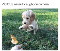 Funny, Camera, and Vicious: VICIOUS assault caught on camera Viewer discretion is advised (doggo via twitter: dangitsnick)