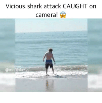 Memes, Shark, and Camera: Vicious shark attack CAUGHT on  Camera!  @mobjokes Don't watch if u have a weak stomach 🤢 Backup: @bitchpride