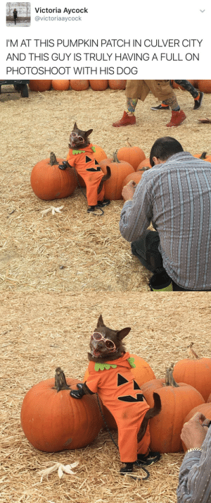 Full On: Victoria Aycock  @victoriaaycock  'M AT THIS PUMPKIN PATCH IN CULVER CITY  AND THIS GUY IS TRULY HAVING A FULL ON  PHOTOSHOOT WITH HIS DOG