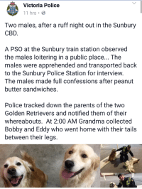 "Grandma, Parents, and Police: Victoria Police  11 hrs C  Two males, after a ruff night out in the Sunbury  CBD  A PSO at the Sunbury train station observed  the males loitering in a public place... The  males were apprehended and transported back  to the Sunbury Police Station for interview  The males made full confessions after peanut  butter sandwiches  Police tracked down the parents of the two  Golden Retrievers and notified them of their  whereabouts. At 2:00 AM Grandma collected  Bobby and Eddy who went home with their tails  between their legs. <p>Wholesome Victoria Police via /r/wholesomememes <a href=""http://ift.tt/2rVBO8m"">http://ift.tt/2rVBO8m</a></p>"