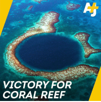 Memes, Back, and 🤖: VICTORY FOR  CORAL REEF When oil drilling threatened this coral reef, voters in Belize fought back... and won.