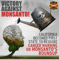 On March 10, Fresno County Superior Court Jugde Kristi Kapetan made a historic decision to require Monsanto to label its blockbuster herbicide, Roundup, as a possible carcinogen: http://orgcns.org/2mIXnnb: VICTORY  MILLIONS  AGAINST  MONSANTO  MONSANTO!  CALIFORNIA  BECOMES FIRST  STATE TO REQUIRE  CANCER WARNING  ON MONSANTO'S  ROUNDUP On March 10, Fresno County Superior Court Jugde Kristi Kapetan made a historic decision to require Monsanto to label its blockbuster herbicide, Roundup, as a possible carcinogen: http://orgcns.org/2mIXnnb