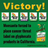 A judge issued the ruling on Friday, dismissing Monsanto's lawsuit. http://orgcns.org/2kHYbam #MonsantoMakesUsSick #BanGlyphosate: Victory!  Roundup Roundup Roundup  Ready Read Readj.  CORN 2 OYBEANS  ALFALFA  CANOLA  COTTON  Monsanto forced to  place cancer threat  ROUNDUP  label on glyphosate  products in California.  organicconsumers org A judge issued the ruling on Friday, dismissing Monsanto's lawsuit. http://orgcns.org/2kHYbam #MonsantoMakesUsSick #BanGlyphosate