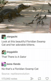 Swamped: viergacht  Look at this beautiful Floridian Swamp  Cat and her adorable kittens.  tiny goblin  That There is A Gator  bone-fiends  No that's a Floridian Swamp Cat  Source: reptilesrevolution  173,942 notes