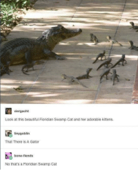 gator: viergacht  Look at this beautiful Floridian Swamp Cat and her adorable kittens.  tinygoblin  That There is A Gator  bone-fiends  No that's a Floridian Swamp Cat