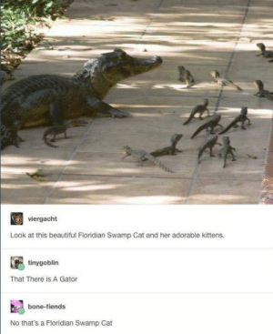 Beautiful, Dank, and Memes: viergacht  Look at this beautiful Floridian Swamp Cat and her adorable kittens.  tinygoblin  That There is A Gator  bone-fiends  No that's a Floridian Swamp Cat Such adorable kittens by haskellogy MORE MEMES