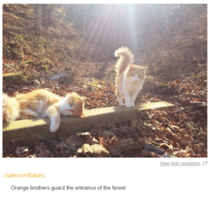 Orange, Quest, and Glorious: View high resolution  cutecornflakes  Orange brothers guard the entrance of the forest My quest has come to a glorious end