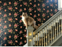 Chill, Monster, and Target: viola-and-chill: awwcutefuzzyanimals: This majestic little lion monster actually made it onto a banister instead of doing his usual hard miss followed by sliding down the railing is this the most aesthetic photo I've ever seen? possibly