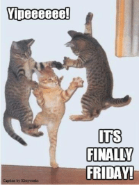 We made it!: Vipeeeeee  caption by Kittyworks  ITS  FINALLY  FRIDAY! We made it!