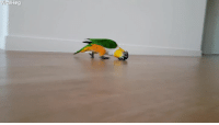 Record, Can, and Parrot: Viral  Hog For the record, this parrot can catcall me anytime
