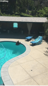 Summer, Bear, and Down: ViralHeg Bear cools down on a hot summer day