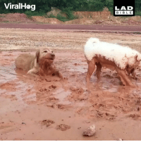 Dogs, Memes, and Bible: ViralHog  LAD  BIBLE Get dogs they said, it'll be fun they said...