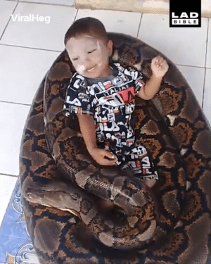 Dank, Bible, and Brave: ViralHog  LAD  BIBLE Just a brave little kid playing with his patient pet snake... 🐍😳