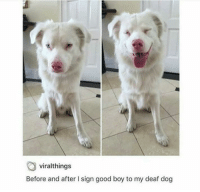 Good, Boy, and Boi: viralthings  Before and after I sign good boy to my deaf dog You can always call your dog a good boi