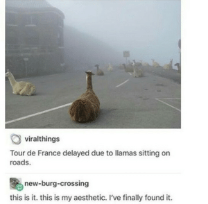Thats a really good reason to delay something.: viralthings  Tour de France delayed due to llamas sitting on  roads.  new-burg-crossing  this is it. this is my aesthetic. I've finally found it. Thats a really good reason to delay something.