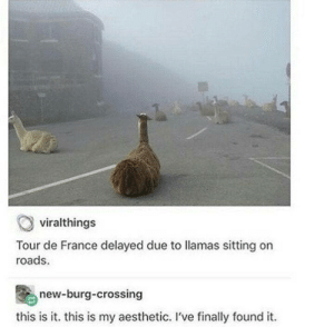 meirl: viralthings  Tour de France delayed due to llamas sitting on  roads  new-burg-crossing  this is it. this is my aesthetic. I've finally found it meirl