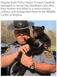 "Police, Cubs, and Good: Virginia State Police Senior Trooper Cepelnik  managed to rescue two blackbear cubs after  their mother was killed in a motor vehicle  collision and transported them to the Wildlife  Center of Virginia <p>Good cop. via /r/wholesomememes <a href=""https://ift.tt/2I3pOJO"">https://ift.tt/2I3pOJO</a></p>"