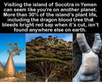 Life, Earth, and Tree: Visiting the island of Socotra in Yemen  can seem like you're on another planet  More than 30% of the island's plant life,  including the dragon blood tree that  bleeds bright red sap when it's cut, isn't  found anywhere else on earth. https://t.co/rPTZVOyaTh
