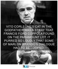 Marlone: VITO CORLEONE'S CAT IN THE  GODFATHER WAS A STRAY THAT  FRANCIS FORD COPPOLA FOUND  ON THE PARAMOUNT LOT. IT  PURRED SO LOUDLY THAT SOME  OF MARLON BRANDO'S DIALOGUE  HAD TO BE LOOPED.  ef  Postize