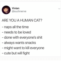 Follow my other account @x__social_butterfly__x for funny animal pics and videos!!: Vivian  @suchnerve  ARE YOU A HUMAN CAT?  - naps all the time  - needs to be loved  done with everyone's shit  always wants snacks  might want to kill everyone  cute but will fight Follow my other account @x__social_butterfly__x for funny animal pics and videos!!