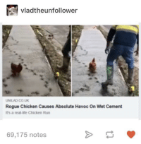 Life, Chicken, and Rogue: vladtheunfollower  UNILAD CO UK  Rogue Chicken Causes Absolute Havoc On Wet Cement  It's a real-life Chicken Rur  69,175 notes An artist, or a criminal?