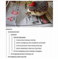 Bad, Bad Day, and Funny: vlakurone  biddncabyticbatch  Ondeto  detectvetancynants  If you've been having a bad day  here's a hedgehog with a strawberry on its head  even if you aven't been having a bad day  here's something to make your day better  PS.The hedgehog is atso reading a newspaper  tne nedgehog dreanis of naving a car  the hedgehog wants to go fas: Follow us for more funny tumblr & textposts!! 😂🤣