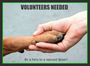 Dogs, Love, and Memes: VOLUNTEERS NEEDED  Be a hero to a rescued Boxer! Want to join our all volunteer boxer-loving rescue?  We are looking for a volunteer to help with APPLICATION COORDINATION for our dogs.  If you love boxers and are looking for a way to volunteer a few hours each week we would love to have you!  Fill out an application here: https://www.nwboxerrescue.org/volunteer