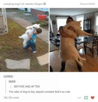 Dank, 🤖, and Dragon: vveeping angel sweater-dragon  crydais  blshiit.  BEFORE AND AFTER  The ratio of dog to boy stayed constant that's so cute  186,726 notes  Source:blshiit