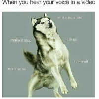 Video, Voice, and What Is: VWhen you hear your voice in a video  what is that sound  make it stop  heck no  this is not me