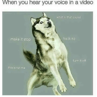 Memes, Help, and Video: VWhen you hear your voice in a video  What is that sound  make it stop  heck no <p>Sounds like the mating call of an ancientancestor if you ask me</p><p><b><i>You need your required daily intake of memes! Follow <a>@nochillmemes</a> for help now!</i></b><br/></p>