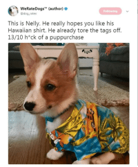 Nelly, Time, and Hawaiian: W  ) e  ekateDogs (author  @dog rates  Following  This is Nelly. He really hopes you like his  Hawaiian shirt. He already tore the tags off.  13/10 h*ck of a puppurchase