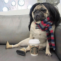 Dressing your pug like a basic bitch is the most adorable form of animal cruelty.: LS  F1 Dressing your pug like a basic bitch is the most adorable form of animal cruelty.