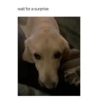 Cute, Funny, and For: wait for a surprise WAIT FOR IT I PROMISE ITS WORTH IT AND SDC (so damn cute)