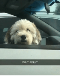 She perfectly describe how we react to random pupper! Tap🔊 Follow @9gag App📲👉@9gagmobile 👈 9gag dogs cute (Credit: TW - aquafairy_ze): WAIT FOR IT She perfectly describe how we react to random pupper! Tap🔊 Follow @9gag App📲👉@9gagmobile 👈 9gag dogs cute (Credit: TW - aquafairy_ze)