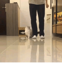 9gag, Memes, and 🤖: Wait for me hooman Follow @9gag - - cr: @littlemunchiepooky - - 9gag munchkin