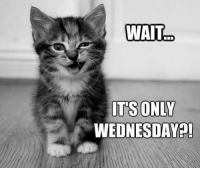 Its Only Wednesday: WAIT  ITS ONLY  WEDNESDAY?!