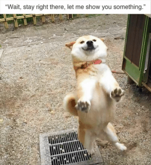 """Animals, Dogs, and Memes: Wait, stay right there, let me show you something."""" Dog Memes Of The Day 32 Pics – Ep35 #dogs #doglovers #lovelyanimalsworld - Lovely Animals World"""