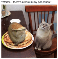 """Hare, Pancakes, and Waiter: """"Waiter... there's a hare in my pancakes!"""""""