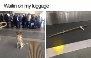 Dank, Memes, and Target: Waitin on my luggage Oh there it is! by AbyssSharp FOLLOW HERE 4 MORE MEMES.