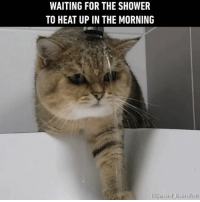 Follow @9gag for more cuteness App📲👉@9gagmobile 👈 9gag cute kawaii petofinstagram scottishstraight instacats (credit: @meeraf_theheadbutt ): WAITING FOR THE SHOWER  TO HEAT UP IN THE MORNING  GC af the headbu Follow @9gag for more cuteness App📲👉@9gagmobile 👈 9gag cute kawaii petofinstagram scottishstraight instacats (credit: @meeraf_theheadbutt )