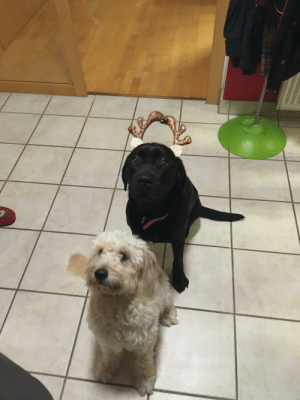 Waiting in line for the Christmas snack: Waiting in line for the Christmas snack