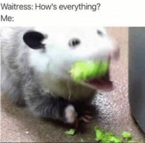 Fresh, Memes, and Animal: Waitress: How's everything?  Me: 17 Fresh Animal Memes That Will Fill You With Joy In The Next Few Minutes - I Can Has Cheezburger?