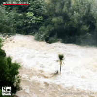 Memes, News, and School: Waiuku, New Zealand  FOX  NEWS  Glenbrook school vla story ful Parts of NewZealand experienced flash flooding and power outages after Tropical Cyclone Debbie hit the area. This video shows WaitangiFalls rushing due to remnants of the storm.
